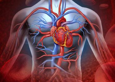 Как алкоголь влияет на сердечно-сосудистую систему