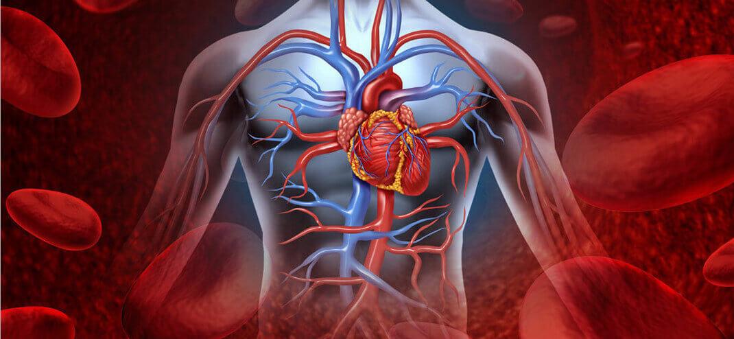 Как алкоголь влияет на сердечно сосудистую систему